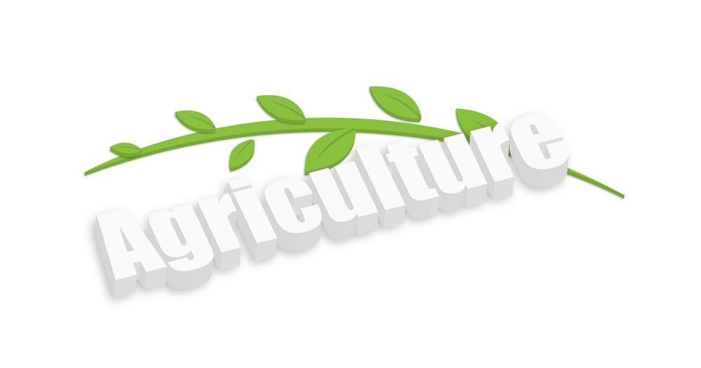 3d Agriculture Leaf Twig