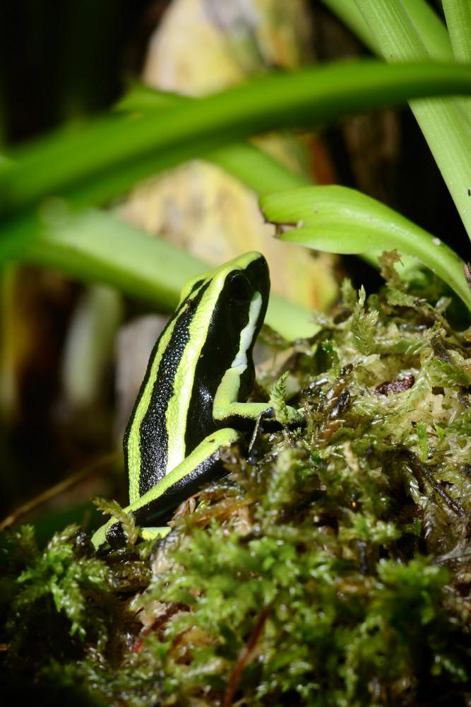 Green frog in terrarium