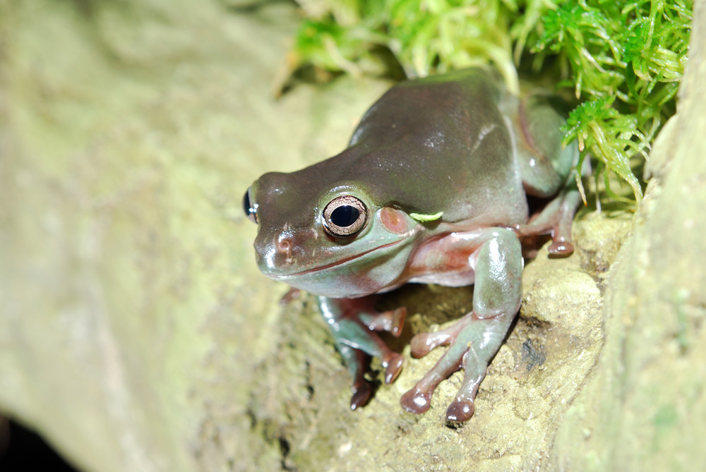 Colorful green frog sitting in terrarium