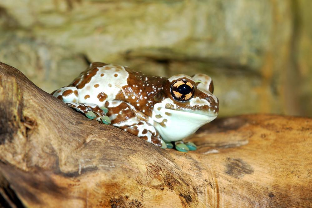 Colorful brown frog sitting in terrarium