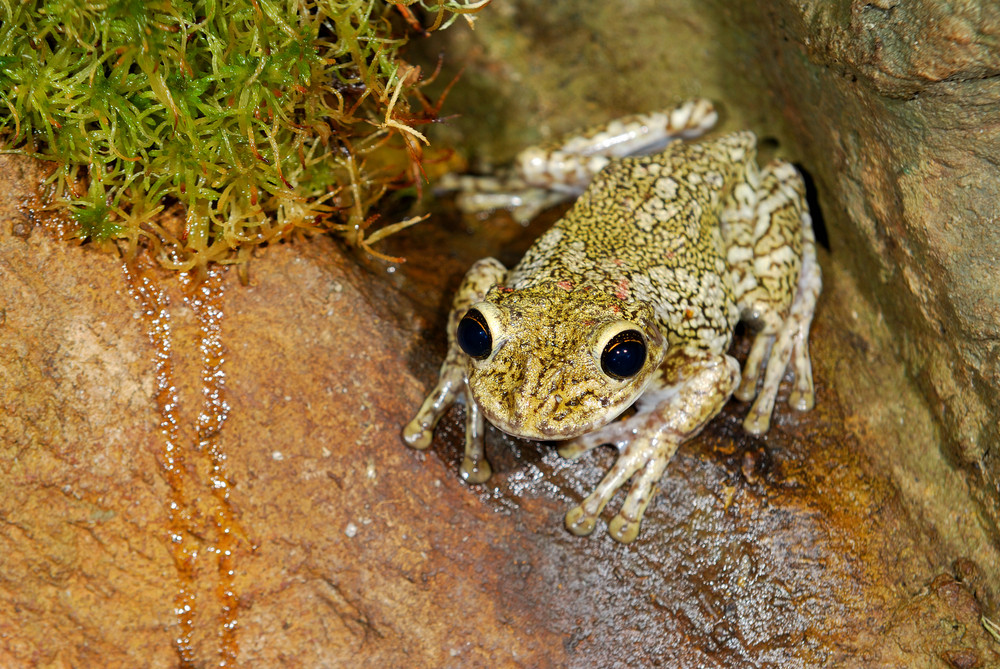 Tropical frog sitting in terrarium