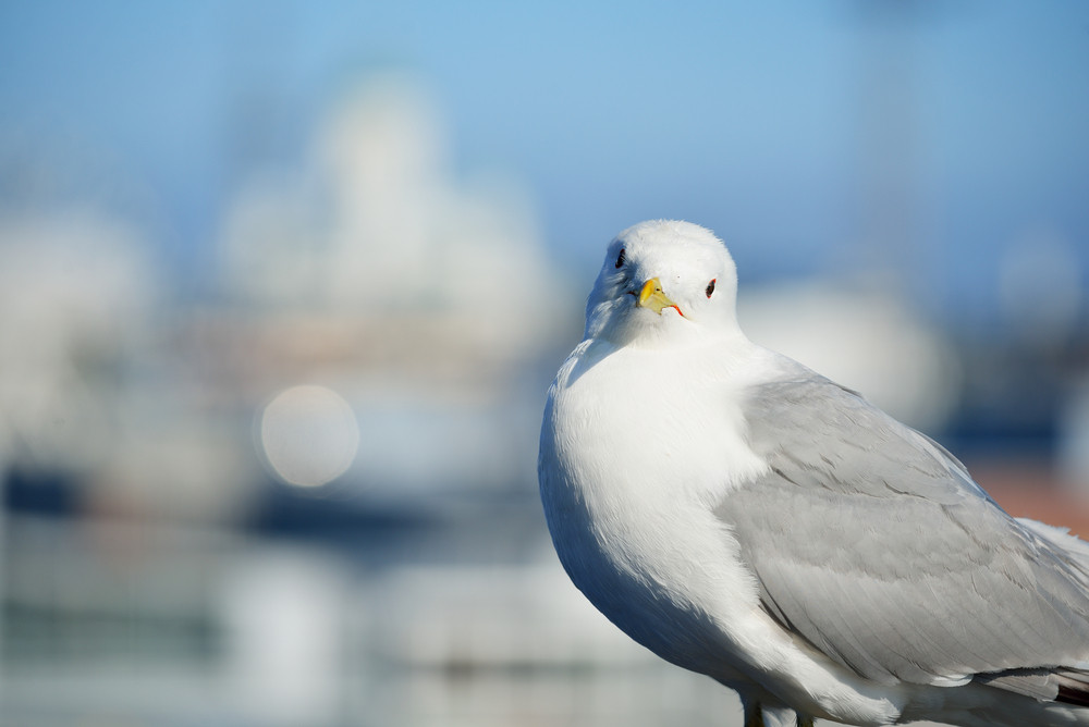 A seagull in Helsinki