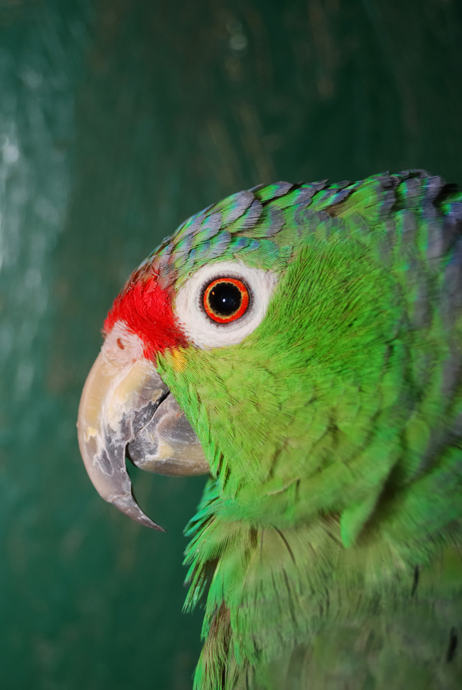 Colourful parrot