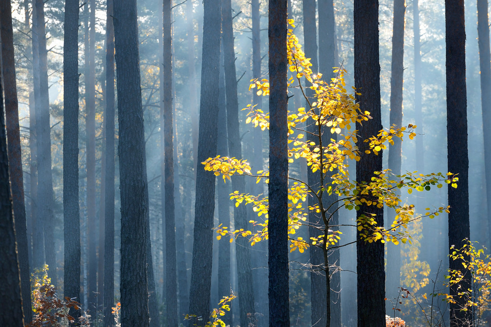 Colorful Lonely Tree In The Forest In Autumn