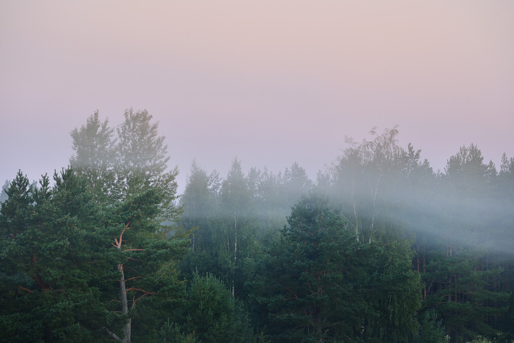 Morning Fog Over The Forest In Latvia
