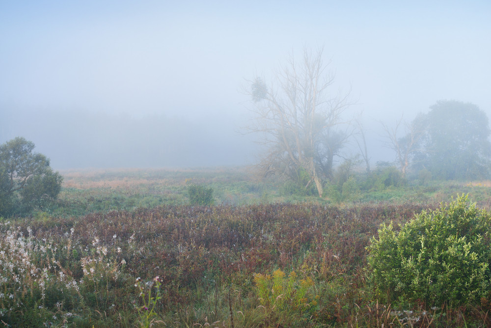 Strong Morning Fog Above The Field
