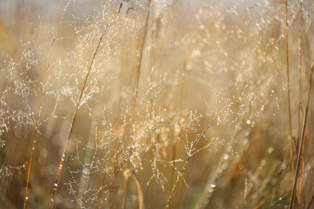 Misty Morning Field Close-up