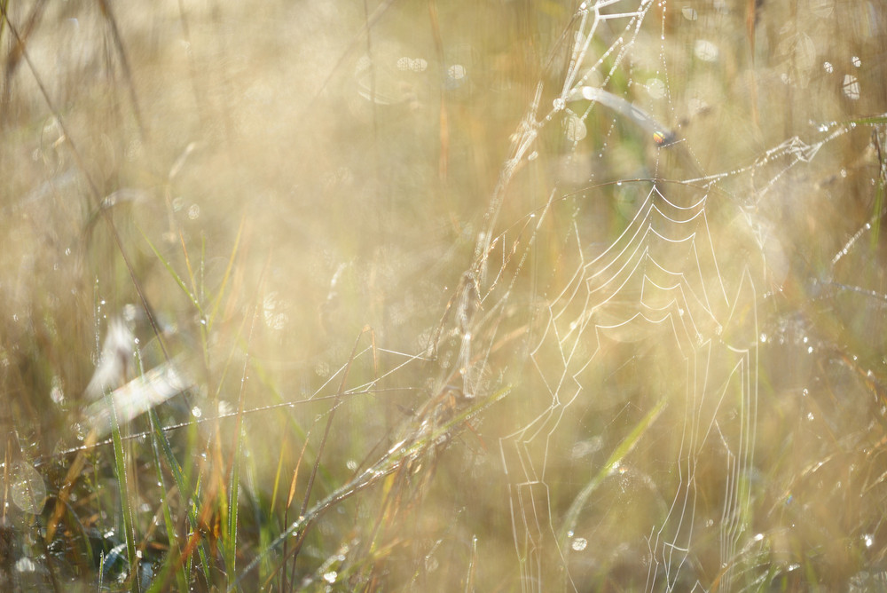 Misty Morning Field Close-up