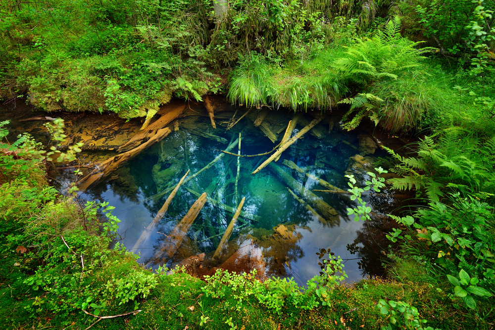 Forest Spring At The Begining Of Hte River In Endla Nature Park