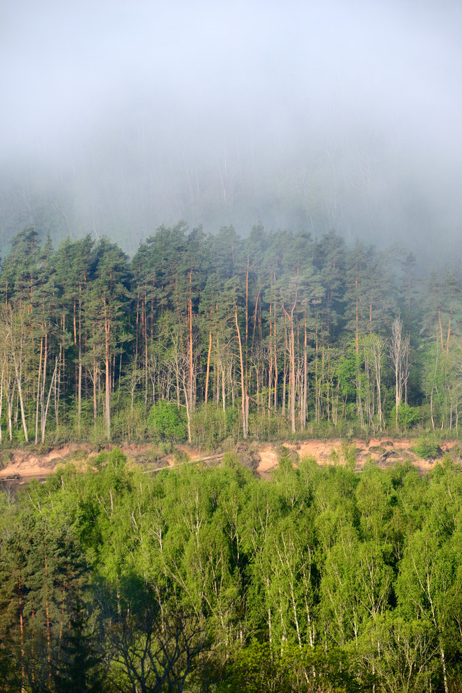 View On Gauja Valley In Spring In Sigulda
