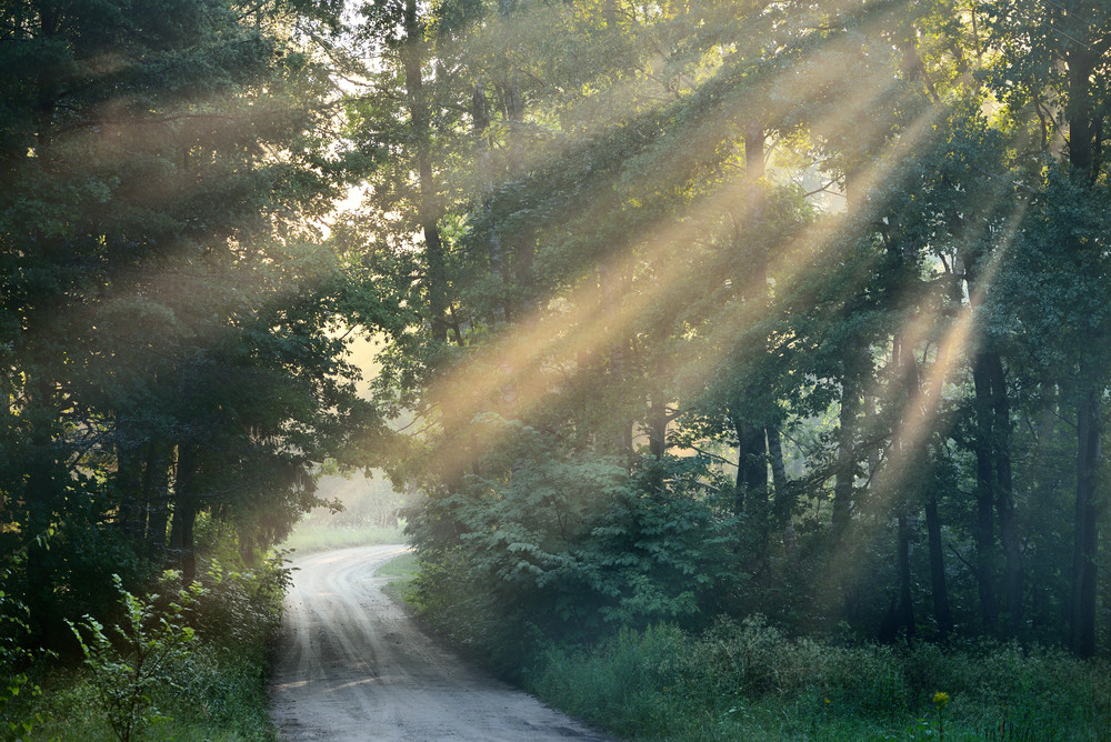 Road And Sunbeams In Strong Fog In The Forest