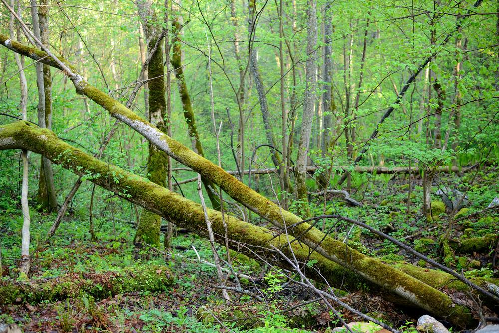 Dark Forest Scene