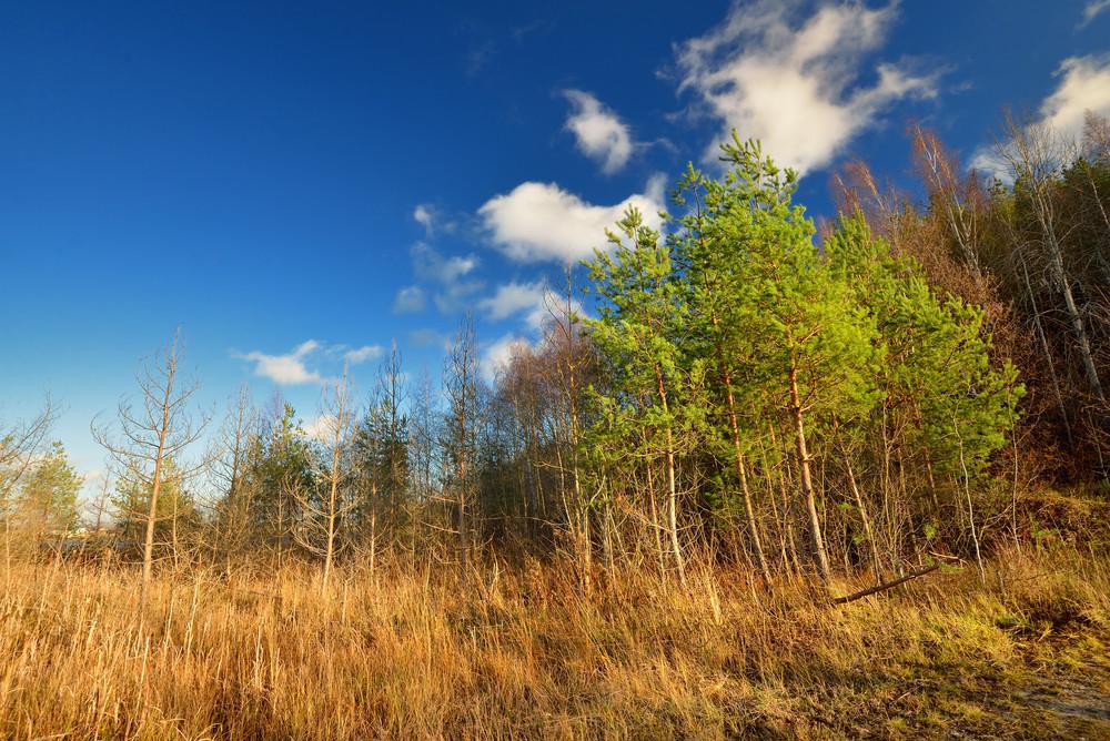 Autumn Landscape Against Blue Sky