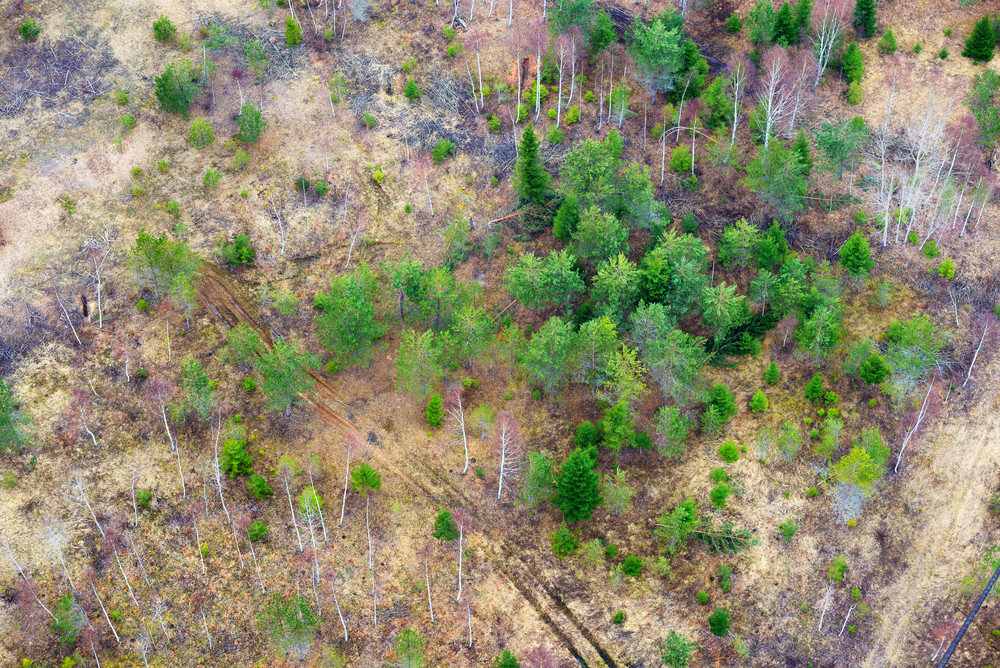 Northern Forest From Areal Point Of View. Latvia.