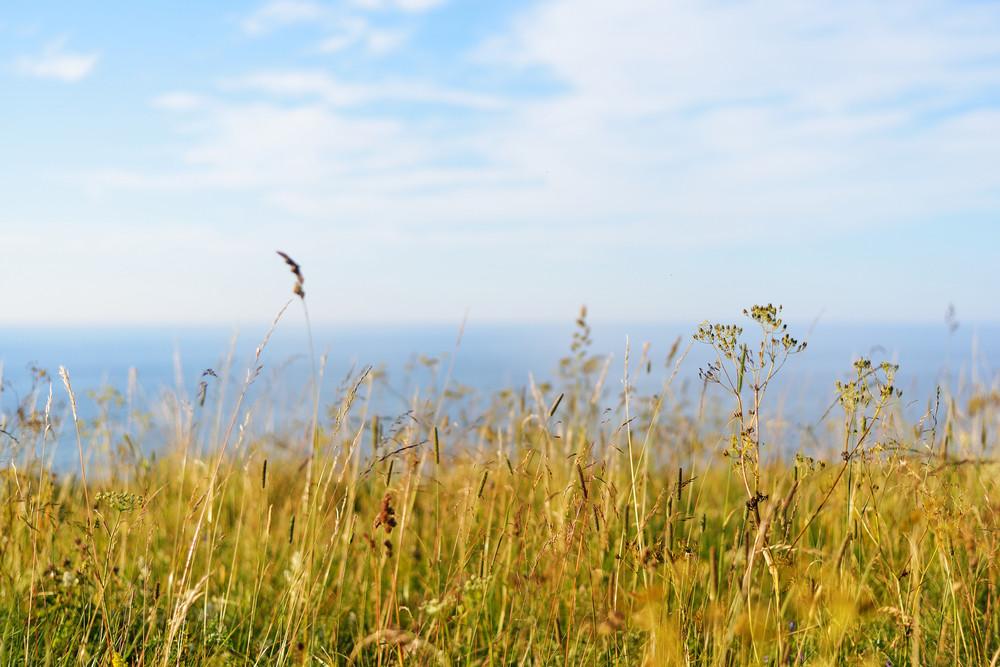 Grass At The Coast In Paldiski