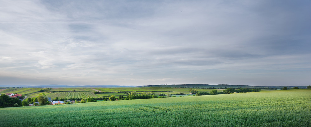 Fields In The Coutryside. Germany