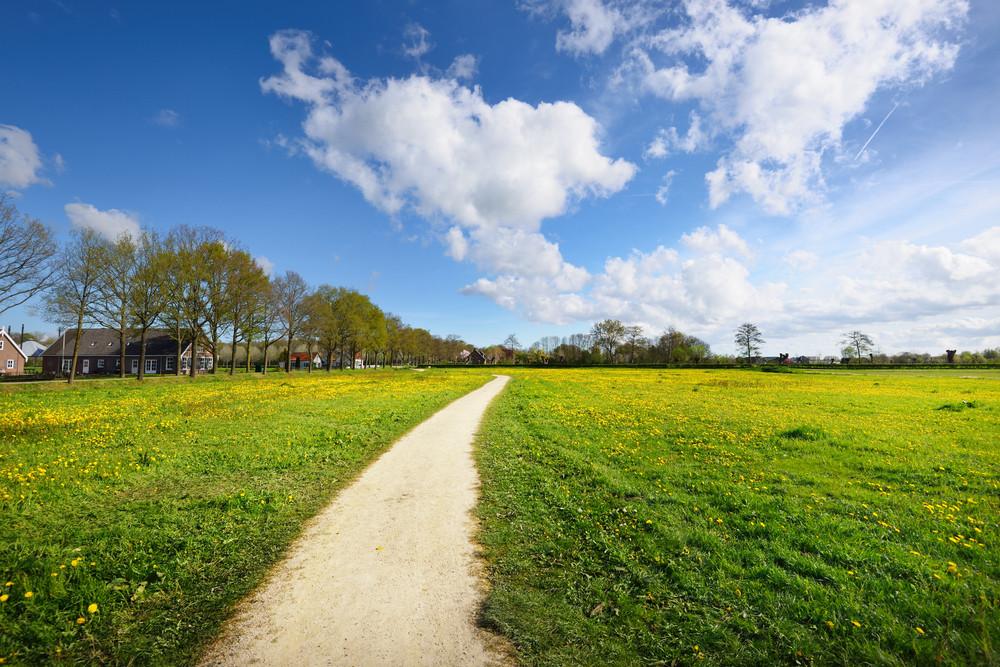 Rural Road In Dandelion Filed In Netherlands