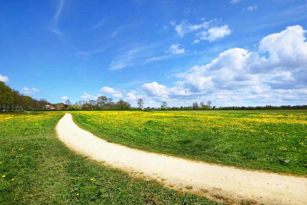 Rural Road In Dandelion Filed In The Netherlands