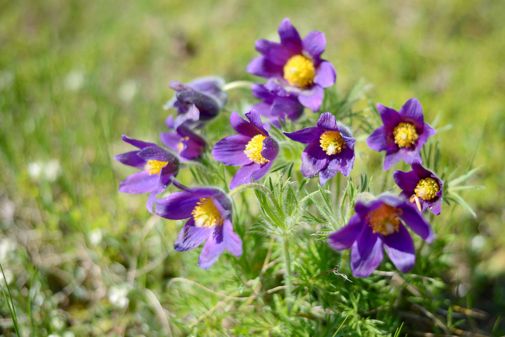 Flowers Close-up In Spring