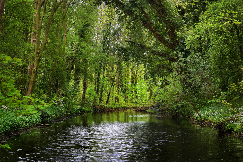 Forest River In Stochemhoeve Park