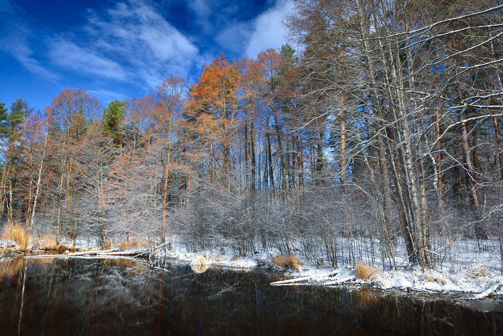 Small Forest Lake In Winter