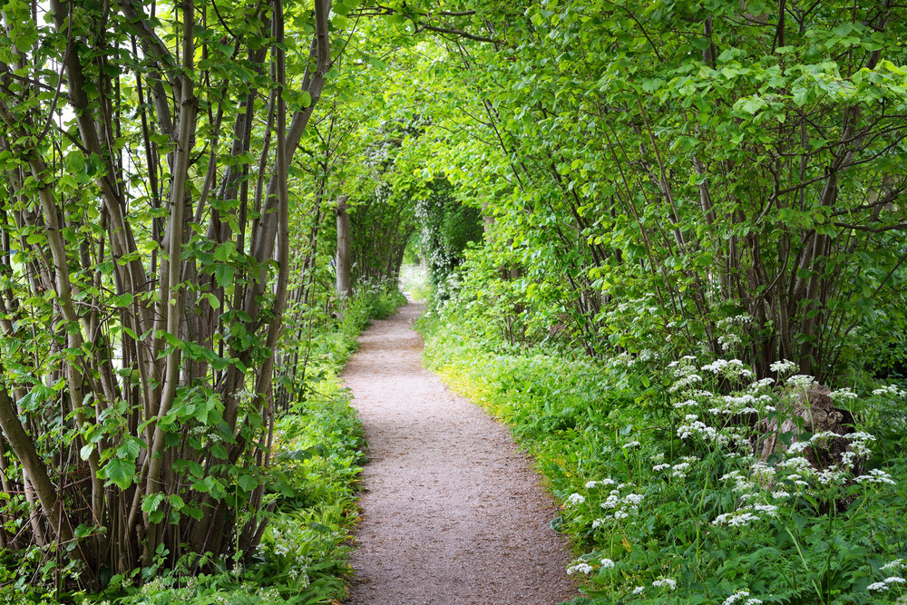 Walkway In Stochemhoeve Forest Park In The Netherlands