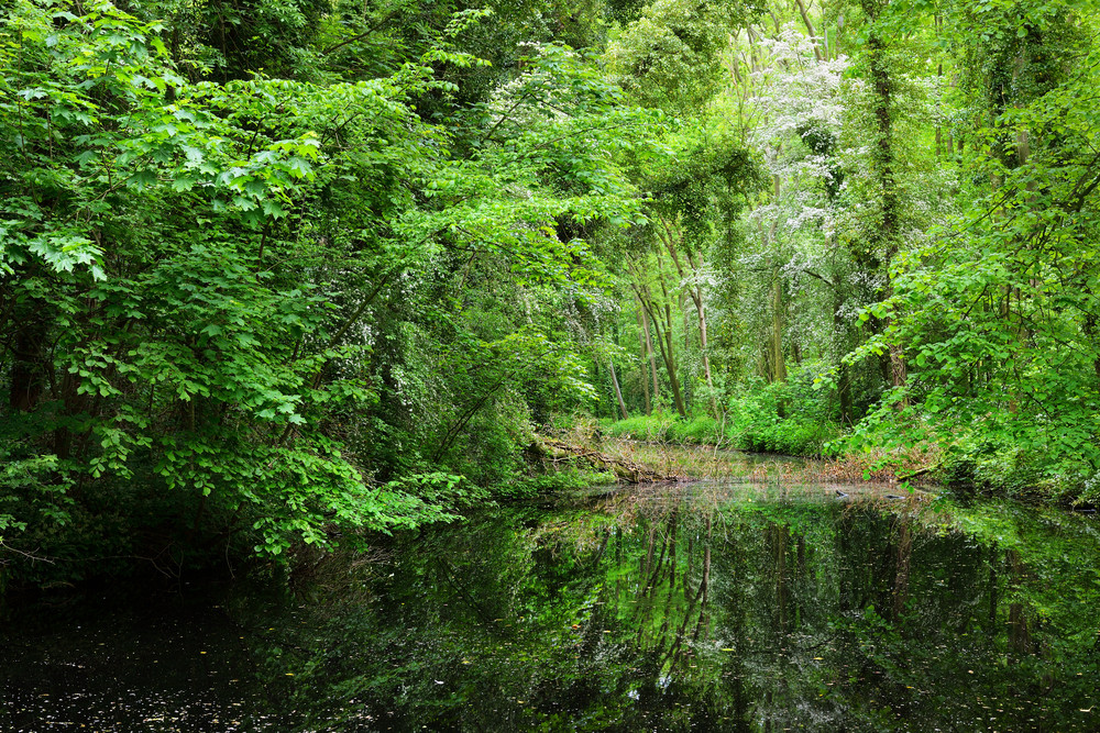 Canal In Stochemhoeve Forest Park In The Netherlands