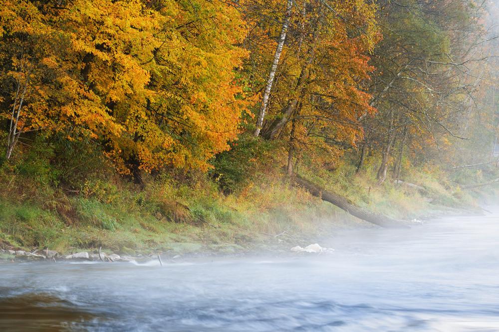 Autumn Gauja River In Sigulda