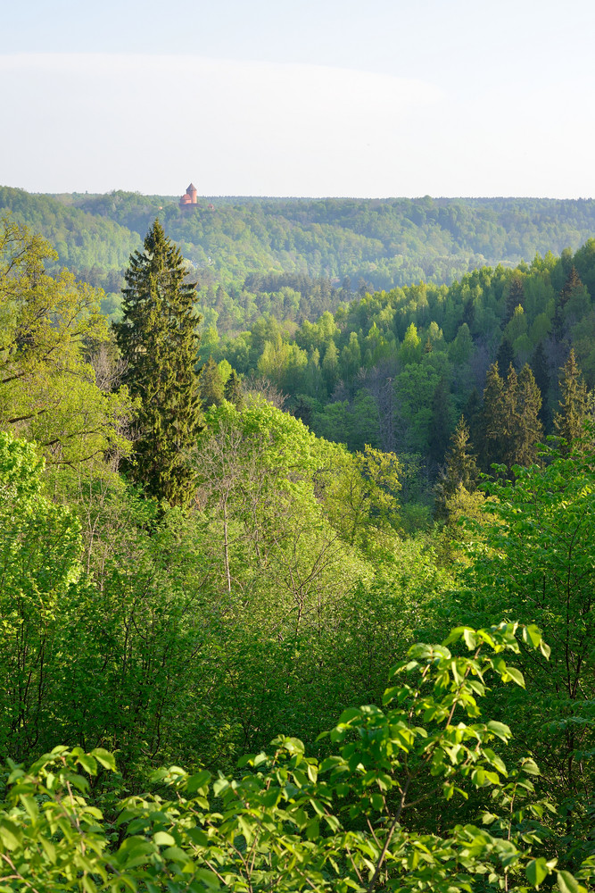 On Gauja River Valley In Spring In Sigulda
