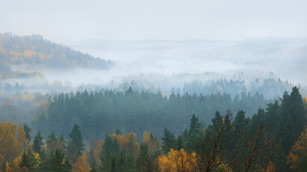Gauja River Valley In Autumn