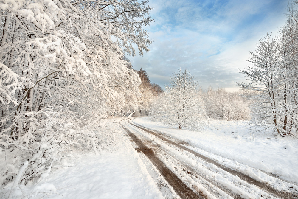Road And A Snow Covered Trees In Latvia