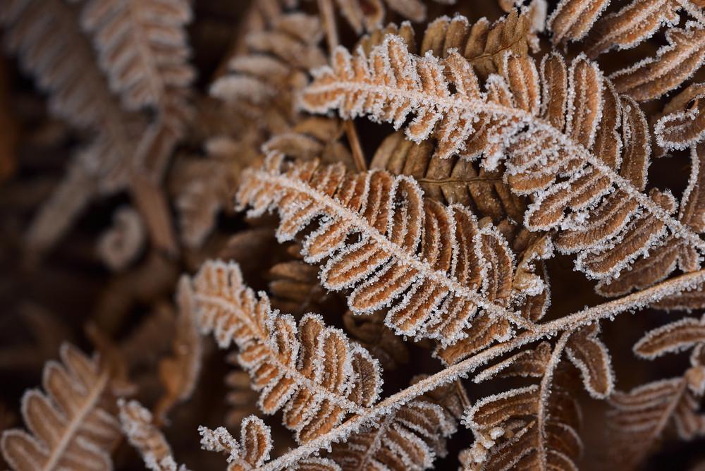 Brown Autumn Fern Pattern
