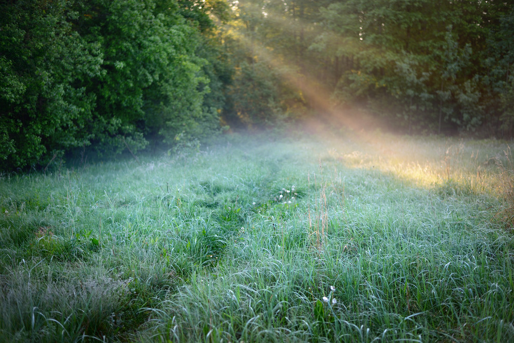 Morning Sunbeams In Fog In The Forest