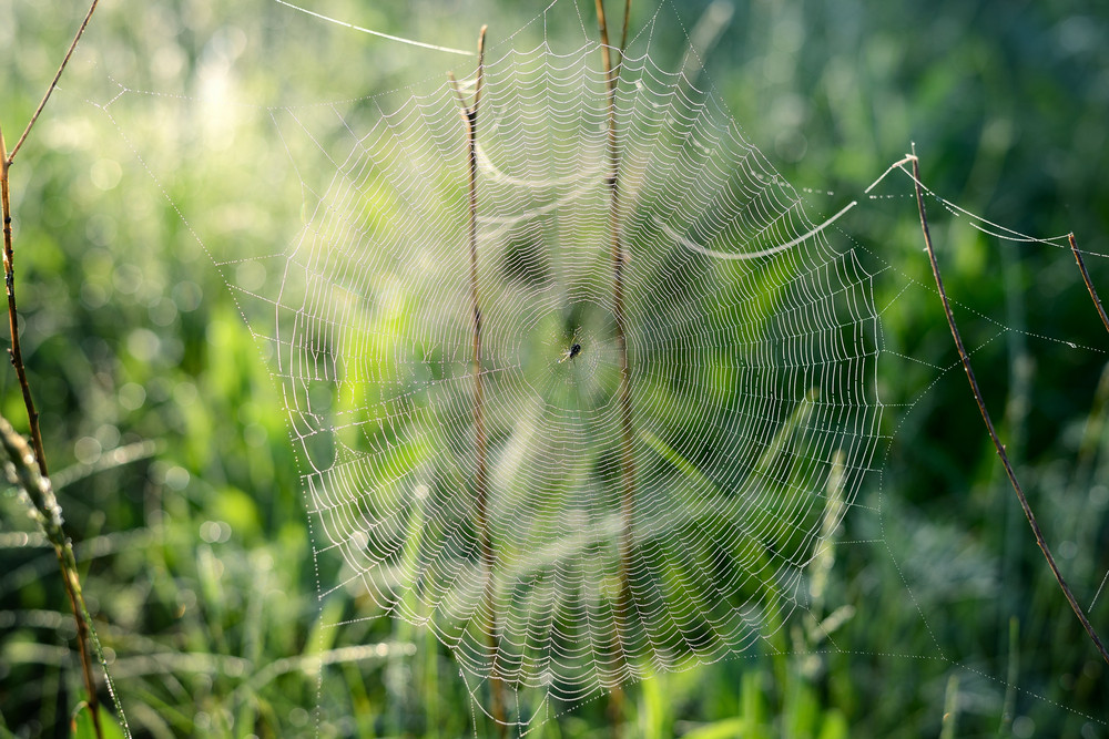 Spider's Web Close-up In The Field In The Early Morning