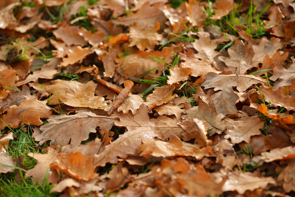 Yeallow Autumn Leaves On The Ground