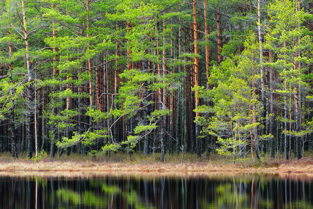 Northern Forest Landscape With A Lake