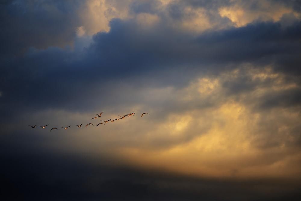 Wild Ducks Against Sunset Sky