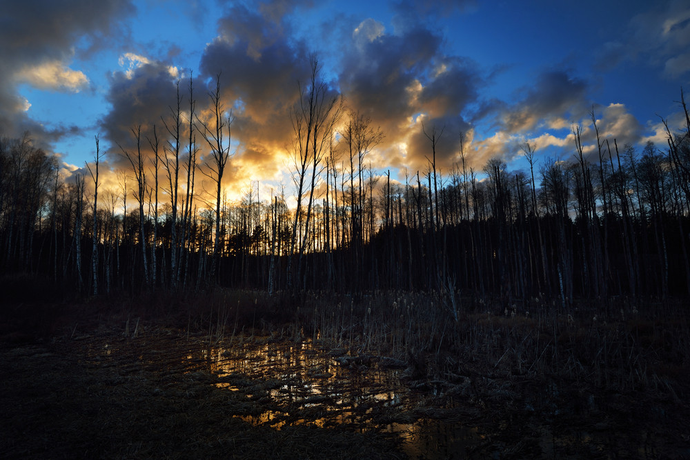 Dark Forest Bog Against The Sunset