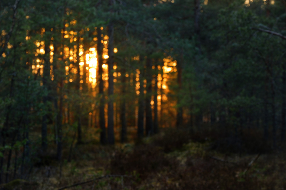 Northern Forest Landscape At The Sunset