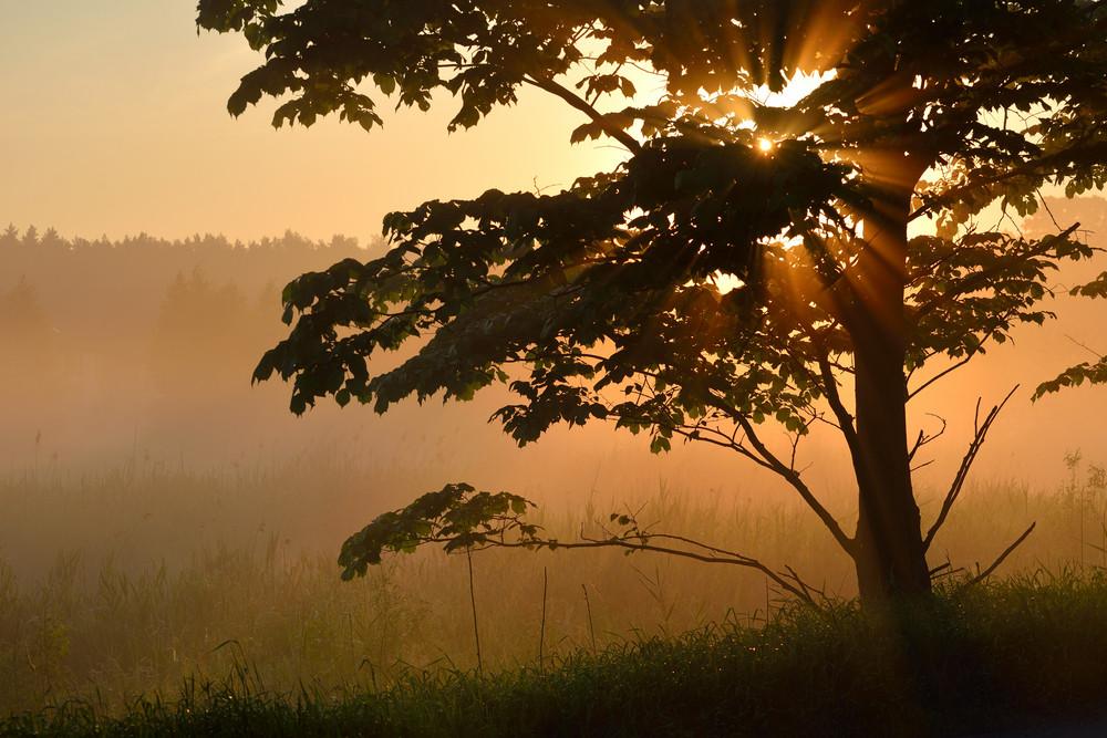 Sunbeams In Tree's Foliage