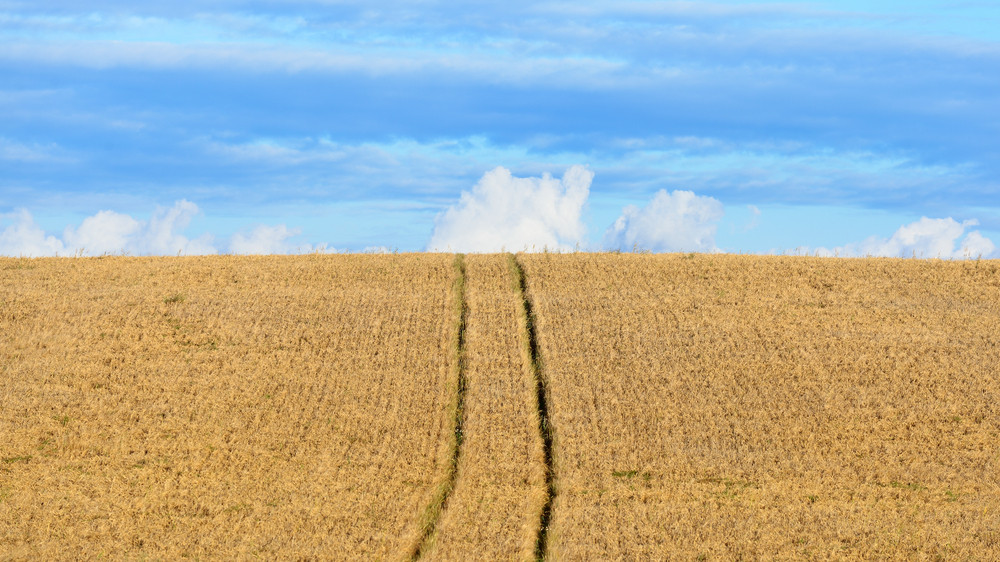 Cereal Field Against Ornamental Cloudscape