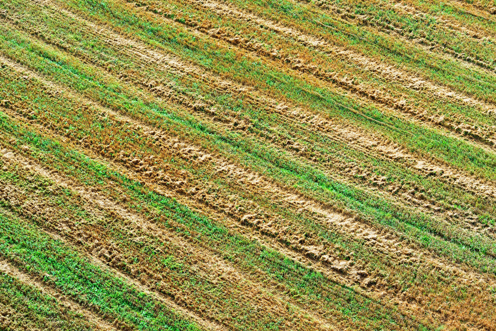 Cereal Field In Latvia
