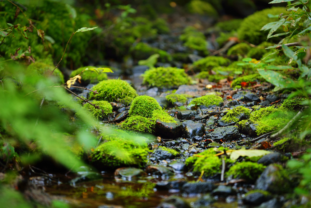 Small Forest River. A Spring Close-up