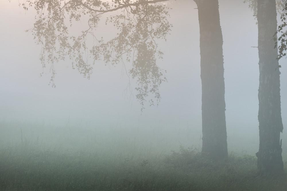 強霧美麗在森林