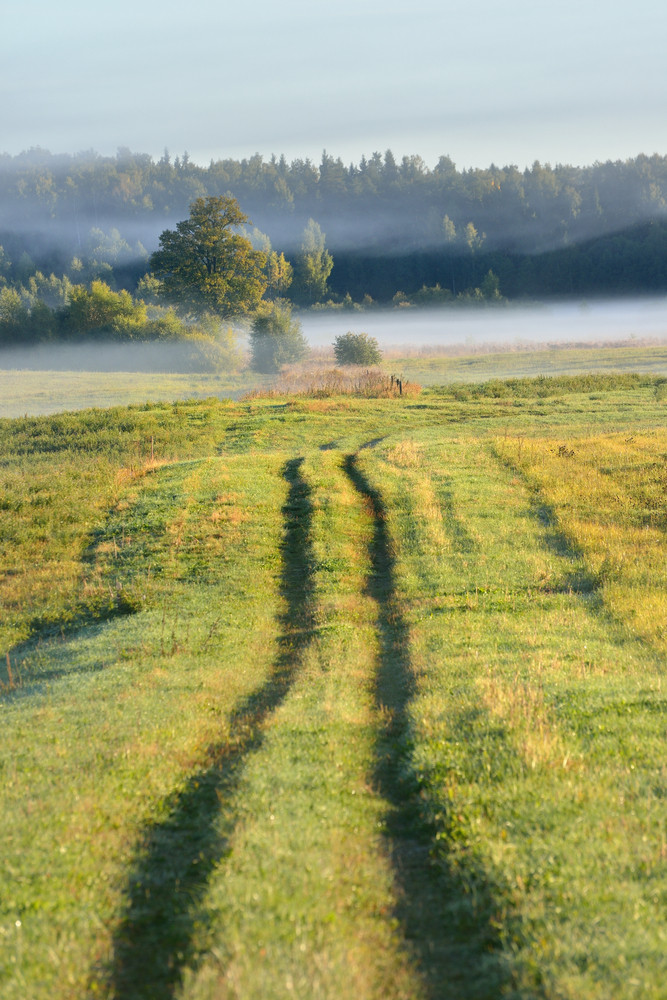 Rural Field Covered With Morning Fog