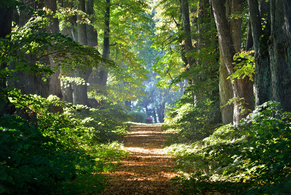 Road In A Beautiful Forest In The Morning