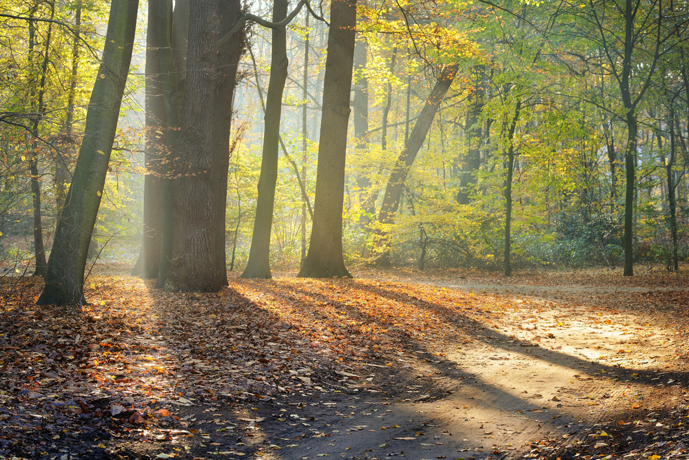 Autumn Forest. Nachtegalenpark In Antwerp