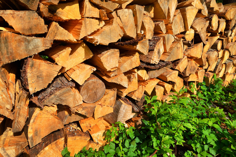 Freshly Made Firewood In The Forest