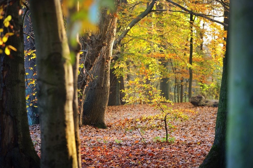 Autumn Forest. Nachtegalenpark In Antwerp