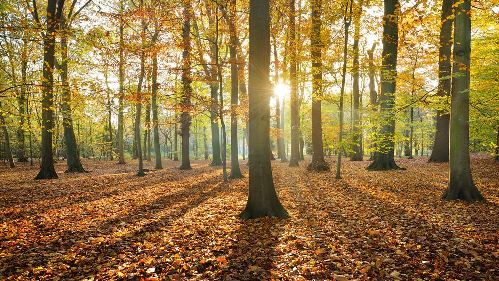 秋季森林。 Nachtegalenpark在安特衛普